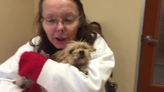 This dog was hit by a car, what happened next was a miracle! - Video