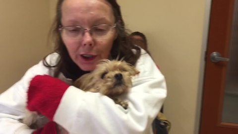 This dog was hit by a car, what happened next was a miracle!
