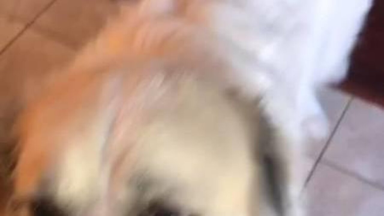 Adorable dog tries mango for the first time and loves it
