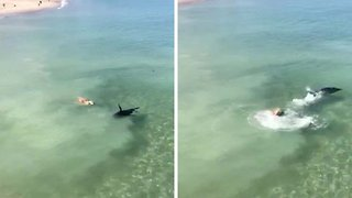 Dog Fails To Make Friends With A Seal On A Beach - Video
