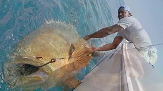 You could soon hunt goliath groupers in Florida | Digital Short - Video