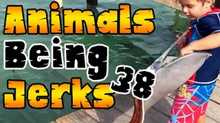 Animals Being Jerks #38 - Video