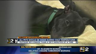 Keep your pets safe from the bitter cold - Video