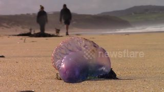 FURTHER FOOTAGE: Portuguese Men O'War swept ashore by gales - Video