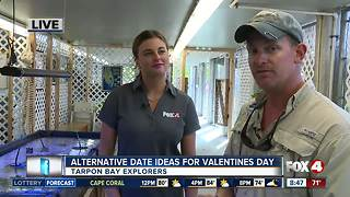 Valentines Day at Tarpon Bay Explorers - 8:30am  live report - Video