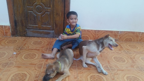 Two dogs they are playing front my hom