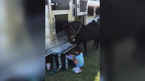 A Little Girl Reads A Book To A Horse