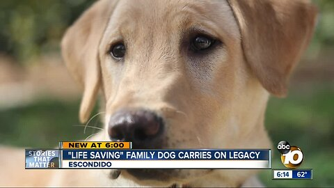 Family clones beloved dog they credit with saving their lives