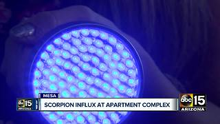 Woman claims scorpion influx at Mesa apartment complex - Video