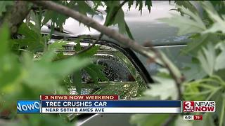 Tree crushes car near 50th and Ames - Video
