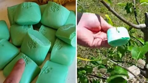 This Is Why You Should Put Irish Spring Soap In Your Garden! | Health and Nutrition Channel