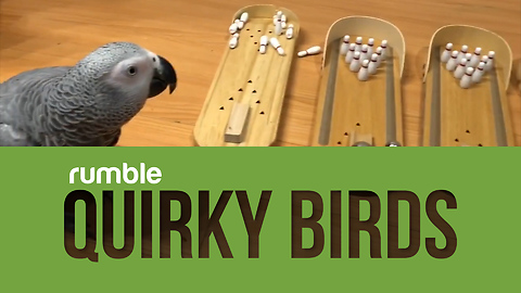 This compilation of quirky birds will brighten your day!