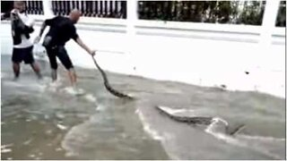 Giant snake is found during floods in Thailand