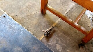 One leg physically challenged small birdie jumping around