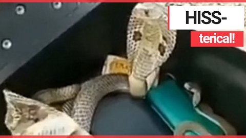 Biker gets a fright when he lifts his scooter seat and finds three COBRAS