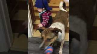 Doogie the Dog Wants to Play Catch With His Little Human Friend - Video