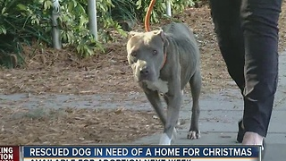 Abandoned dog needs new home for Christmas - Video