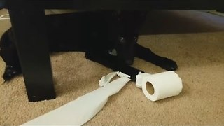 Guilty Puppy Gets Caught Shredding Toilet Paper - Video