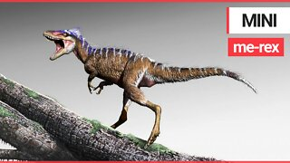 Tiny ancestor of king of the dinosaurs discovered