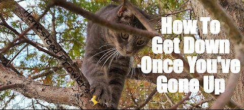 Homestead Cat ~ Floki ~ Master Tree Climber