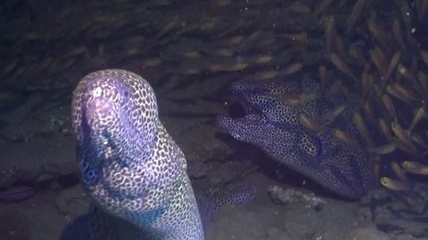 Underwater photographer captures the moment an eel launches a surprise attack on him