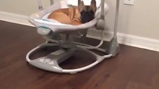 French Bulldog puppy naps in baby's swing - Video