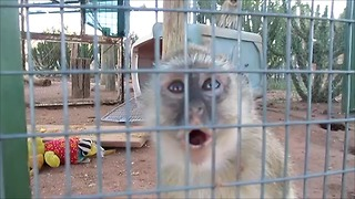 Having a conversation with a baby monkey - Video