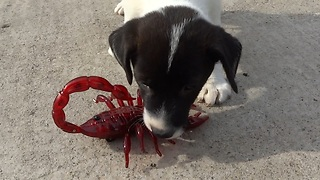 Fearless puppies take on scary robot scorpion