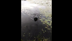 Hero dog saves baby bird in lake - Video