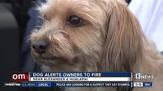 Dog saves Las Vegas family from fire - Video