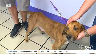 Fox 4's Pet of the Week is Mixy at Gulf Coast Humane Society