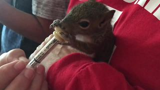Baby squirrels rehabilitating after Irma | Digital Short - Video