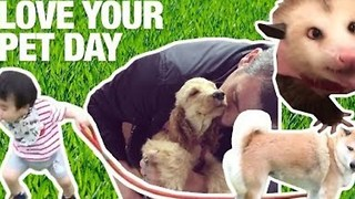 5 Ways to Celebrate Love Your Pet Day - Video