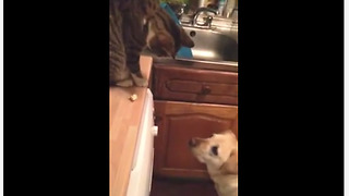 Generous cat feeds popcorn to the dog - Video