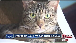 Preparing your pet for Thanksgiving