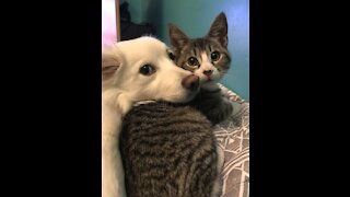 Funny dog and cat 10