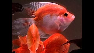 Amazing New Aqua Pets - Video