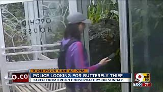 Police looking for butterfly thief
