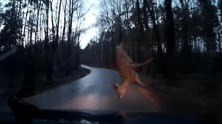 DASHCAM: My Car Hit a Deer  - Video