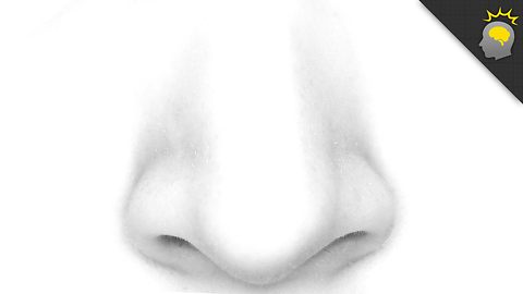 Stuff to Blow Your Mind: What Your Nose Can Tell You? - Epic Science