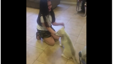 Little Girl Cries With Joy Over Husky Puppy Surprise