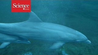 How dolphin moms reunite with their babies - Video