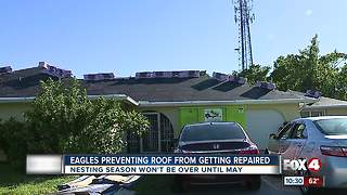 Eagles prevent man from fixing his roof - Video