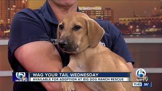 Wag Your Tail Wednesday with Big Dog Ranch Rescue