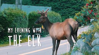 My Evening with the Elk