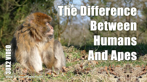 Is there a difference between humans and apes?