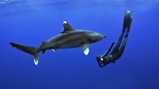 Shark Free Diving: Woman Dives With White Tip Shark - Video