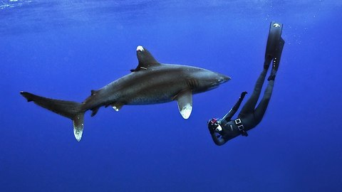 Woman Fearlessly Dives With White Tip Shark