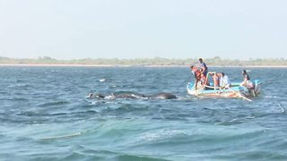 Sri Lankan navy's dramatic rescue of two elephants drowing in deep sea - Video