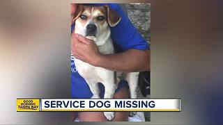 Tampa family desperate to find lost service dog before Christmas - Video